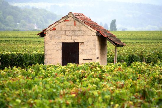 Rossignol-Trapet, Burgund