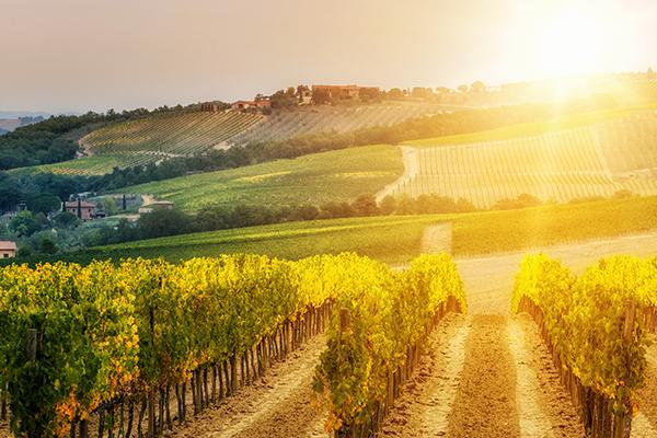 Weinabend - Italien - KW7