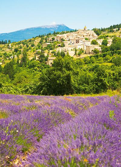 Domaine de Triennes, Provence