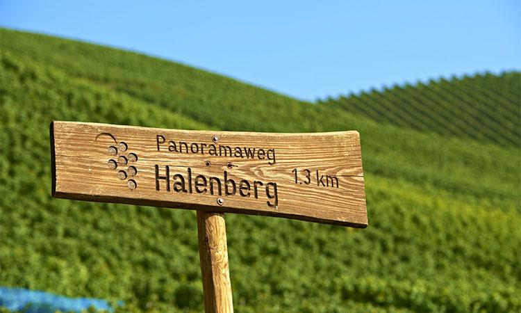 Der Harlenberg - Rundwanderweg
