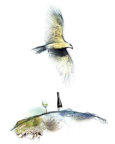 Illustration zum Weingut Emrich-Schönleber