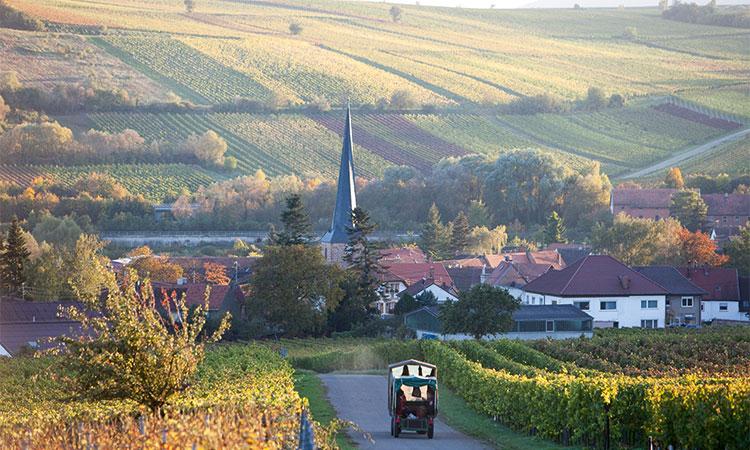 Wie der Wein, so die Berge: im Sonnenschein