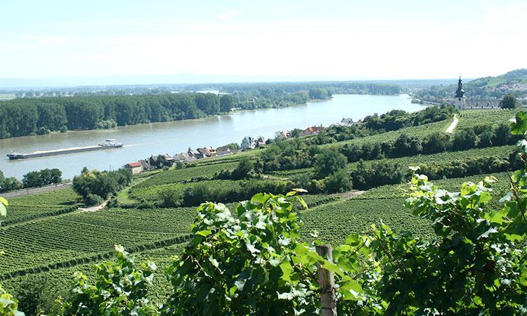 Anbauregion Rheinhessen