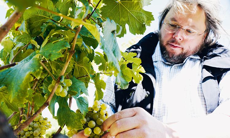 Weingut Bernhard Ott