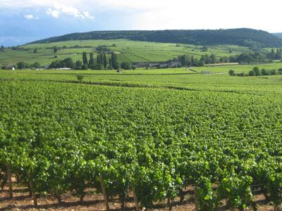 Boisson-Vadot - Burgund