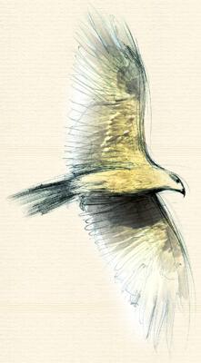 Schoenleber Adler