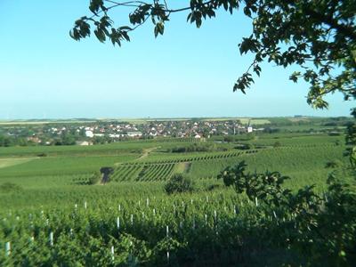 Weingut Seehof