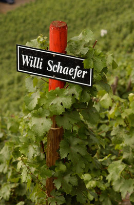 Willi Schaefer – Graach