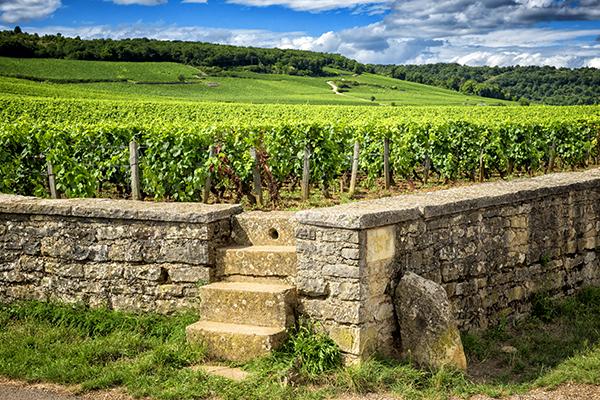 Weinabend - Burgund - KW27
