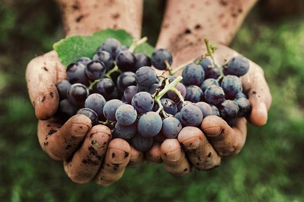 Weinabend - Pinot Noir - KW36
